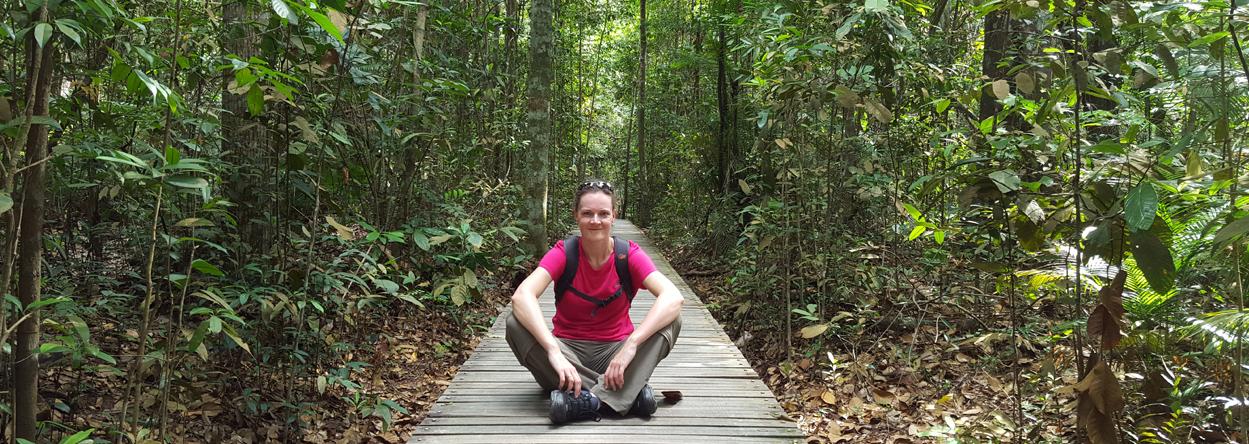Wanderweg durch Singapur's Regenwald
