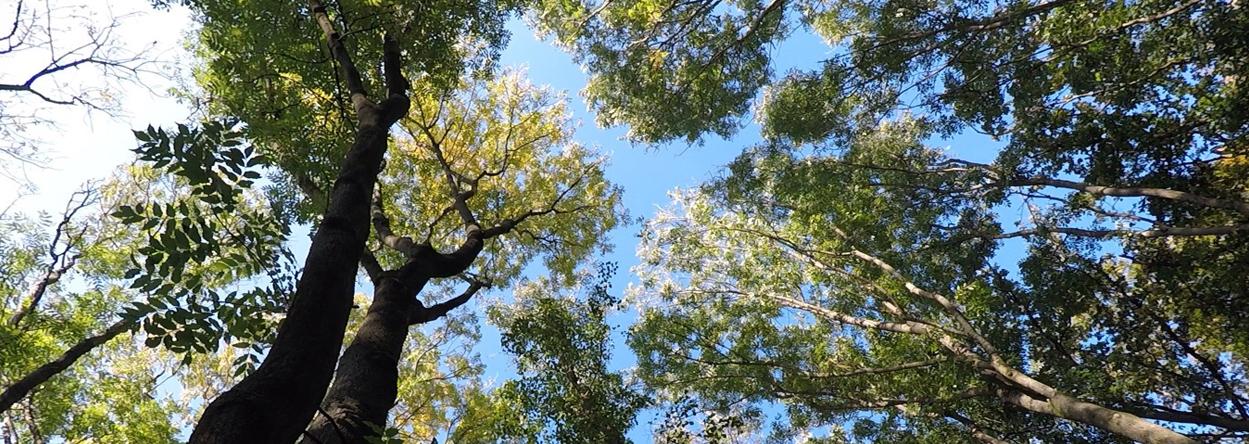 Baum zum Klettern