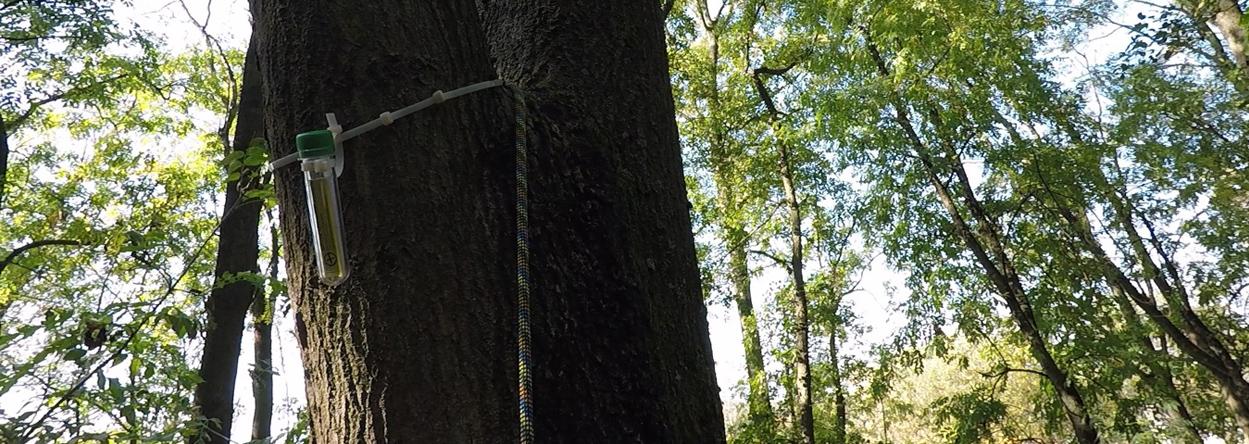 Bild eines Geocaches im Baum