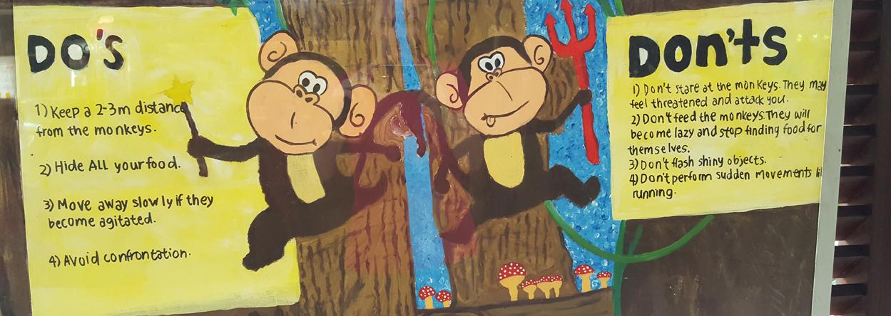 Regeln für das Zusammentreffen mit Affen