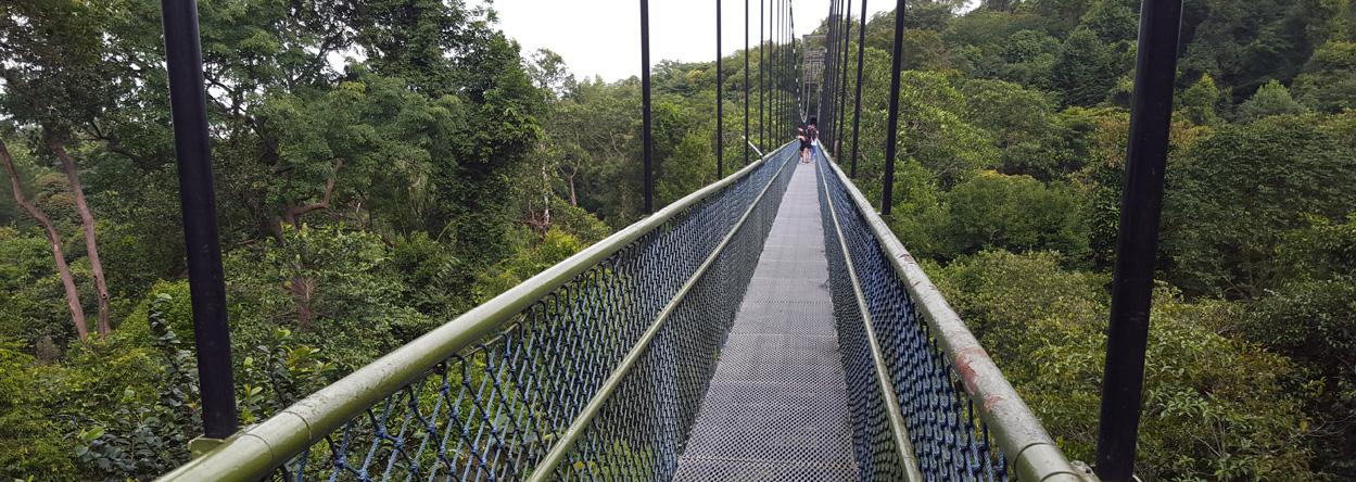 Bild von der 250m langen Hängebrücke im MacRitchie Reservoir