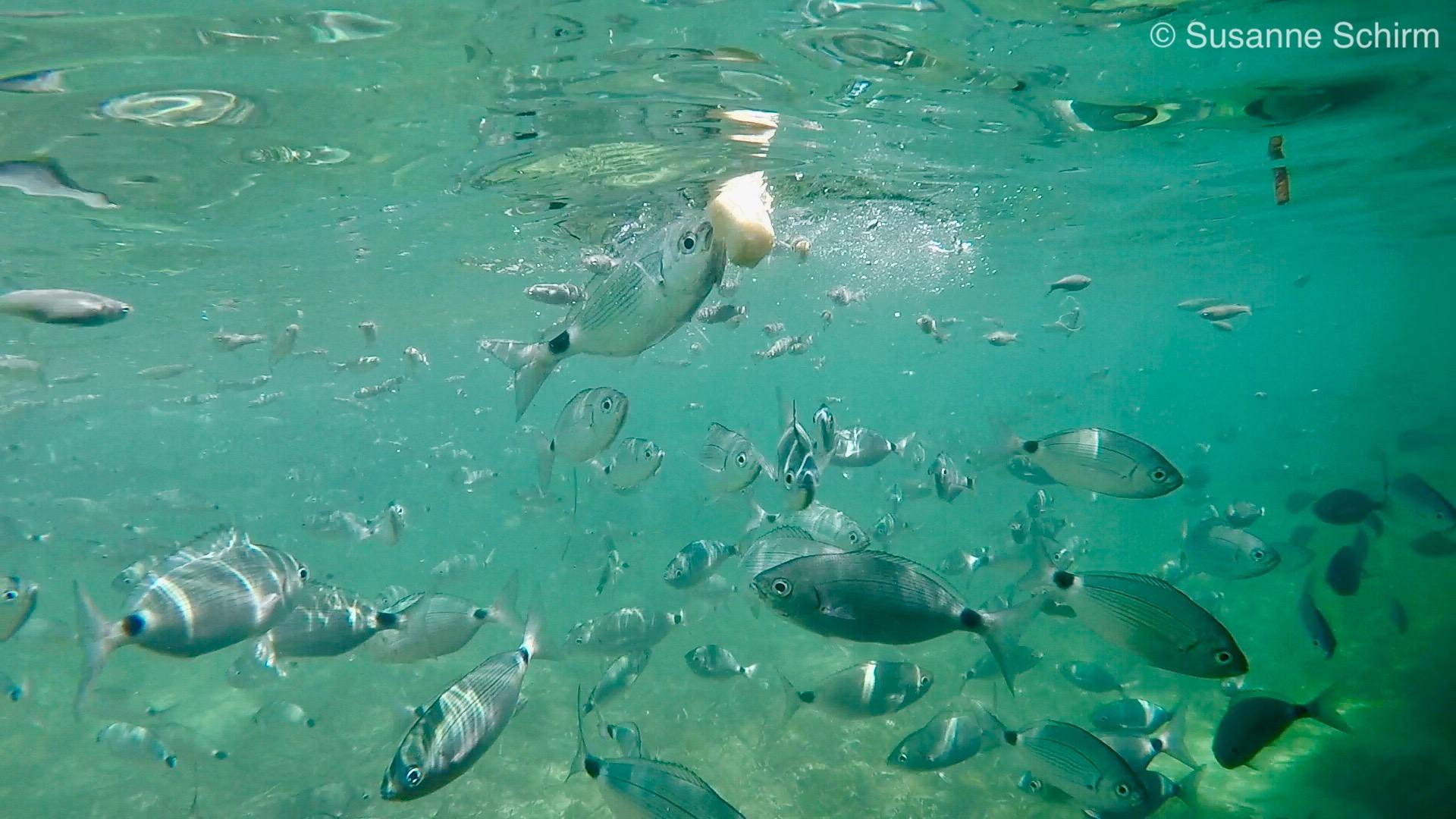 Mit der GoPro Hero 5 Black aufgenommenes Unterwasserfoto