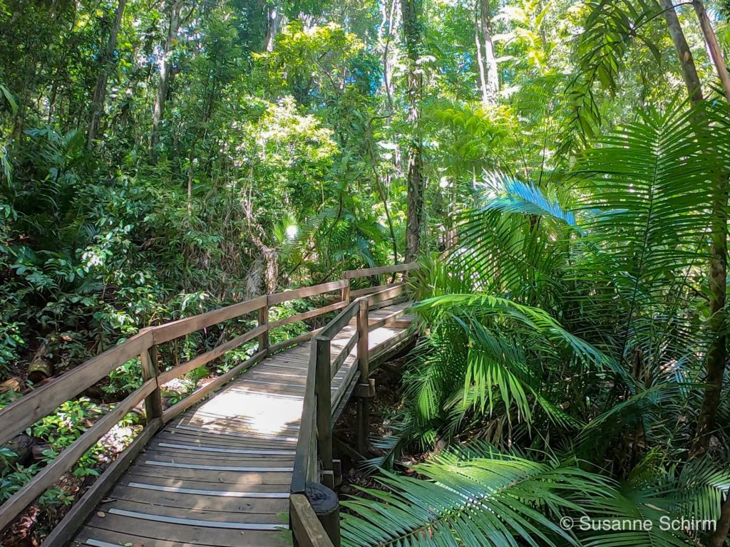 Jindalba Board Walk im Daintree-Nationalpark