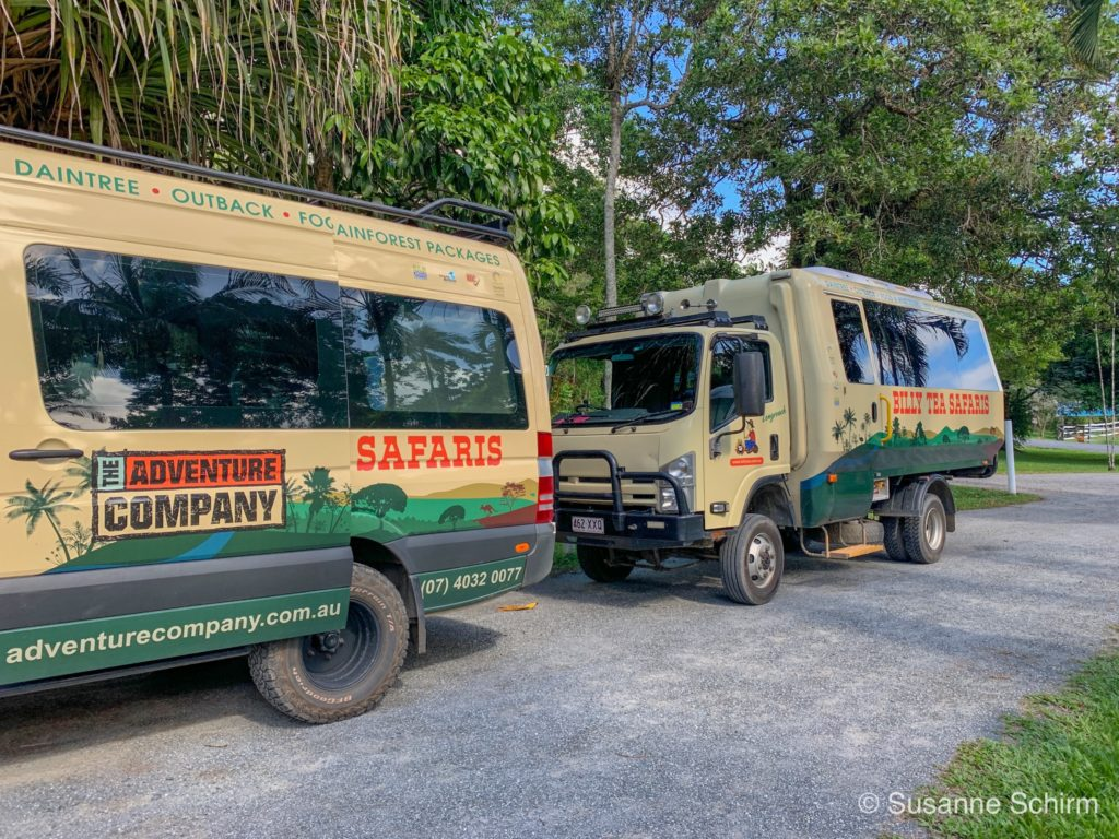 Mit Billy Tea Safaris in den Daintree-Nationalpark