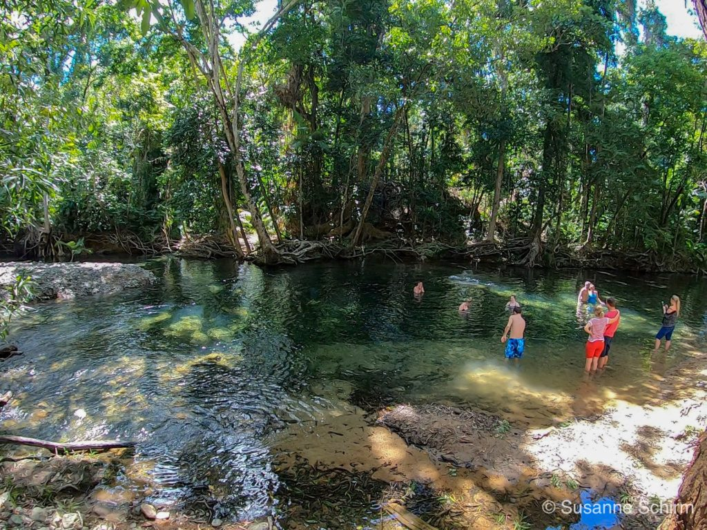 Emmagen Creek im Daintree-Nationalpark